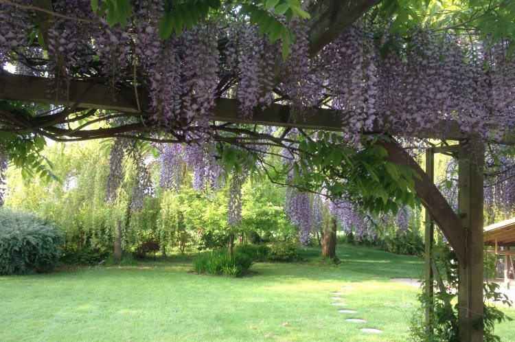 Sarah Church provides a beautiful garden outlook for her Yoga and Meditation in Guildford.