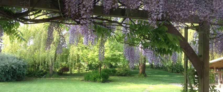 Sarah Church provides a beautiful garden outlook for her Yoga and Meditation in Guildford