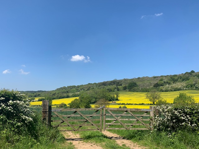 Relaxing field for Meditation Workshop in Guildford
